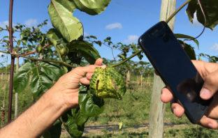 Aplicativo de celular para maracujá